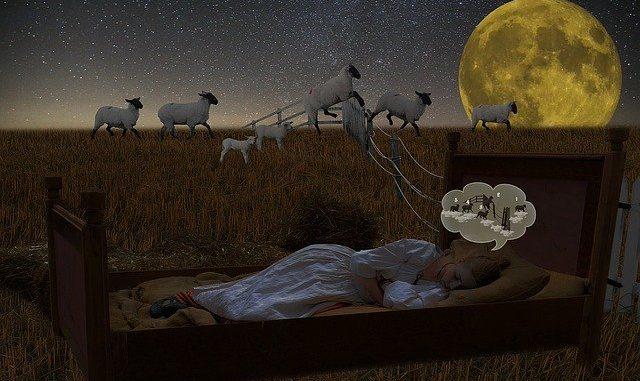 insomnie compter les moutons